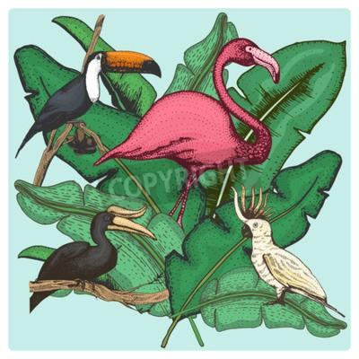 Canvas print hand drawn vector realistic bird, sketch graphic style, set of domestic. cockatoo parrot and rhinoceros hornbill, toco toucan and flamingo