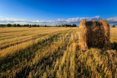 Haystacks on the field in Autumn season. Rural landscape with cloudy sky background. Golden harvest of wheat in evening.