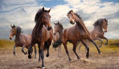 Canvas print herd of horses