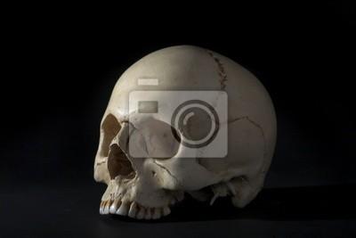 Homo sapience cranium isolated on black background