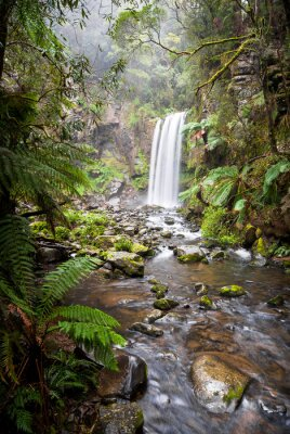 Canvas print Hopetoun Falls, a secluded waterfall in the Otway Ranges, Australia