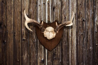 Canvas print Horns on a wooden wall