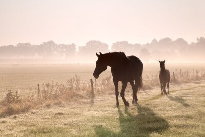 Canvas print horse and foal silhouettes in fog