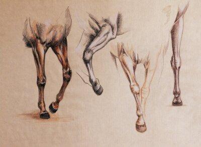 Canvas print horse legs study