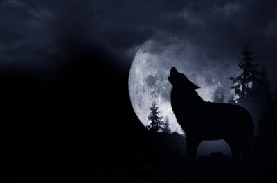 Canvas print Howling Wolf Background