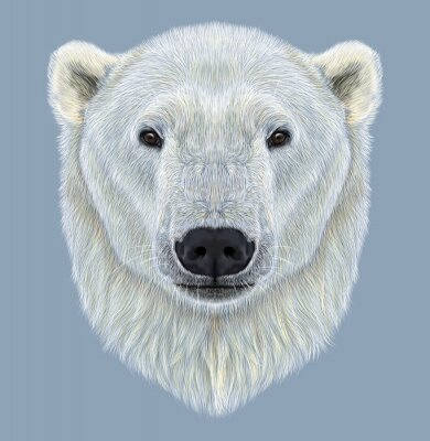 Canvas print Illustrated Portrait of Polar Bear