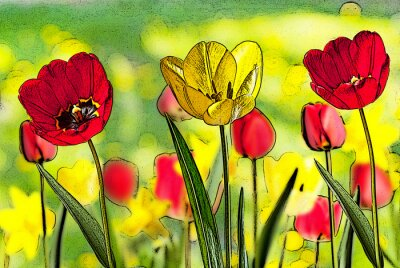 Canvas print illustration of bed of tulips