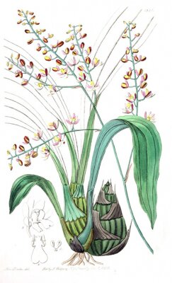 Canvas print Illustration of plant