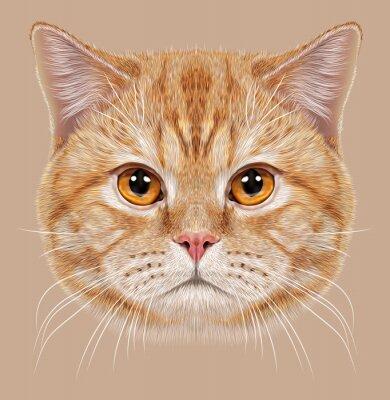 Canvas print Illustration of Portrait British short hair Cat. Cute orange Domestic cat with copper eyes.