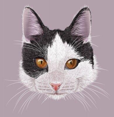 Canvas print Illustration Portrait of Domestic cat. Cute young bi-colour cat with orange eyes.