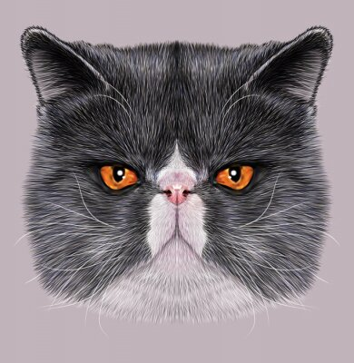 Canvas print Illustrative Portrait of Maine Coon. Cute bi-colour domestic cat with green eyes.