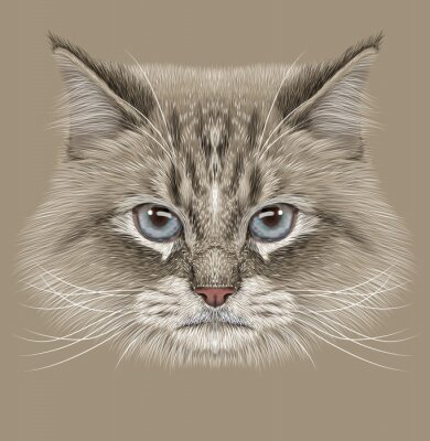 Canvas print Illustrative Portrait of Siberian Cat. Cute Domestic colour point Cat with blue eyes.