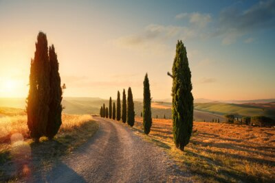 Canvas print italy tuscany countryside rolling hills; summer farmland and country road;