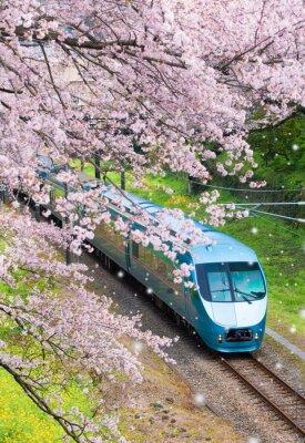 Canvas print Japan train in sakura cherry blossom seasom at Yamakita Town , Kanagawa prefecture