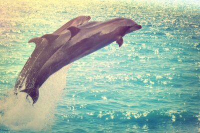 Canvas print jumping dolphins