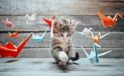 Canvas print Kitten is playing with paper cranes