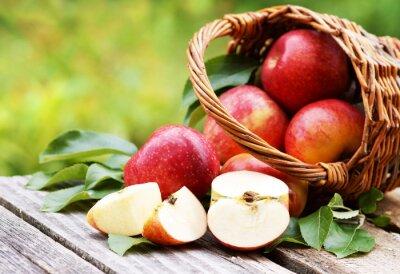 Canvas print Korb mit frischen Äpfeln