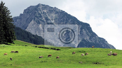 Kuh Weide 8