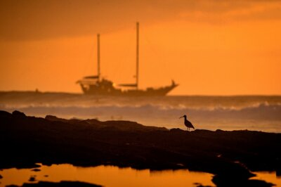 Landscape at sunset beach sea with waves surf boat sailing two trees on the horizon and seagull sailboat in beautiful mild orange light sail race  yachting tourism maritime evening walk romantic trip