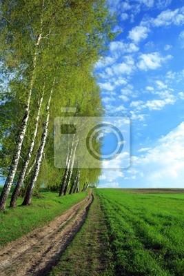 Lane in a field