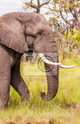 Canvas print Large Elephant