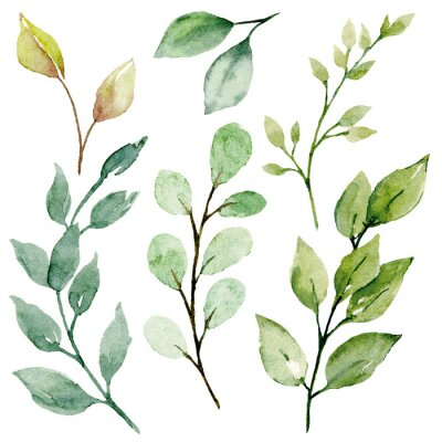 Canvas print Leaves watercolor set. Hand painting floral illustration. Green leaf, plants, foliage, branches isolated on white background.