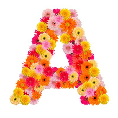 Canvas print Letter A alphabet with gerbera  isolated on white background