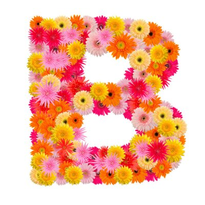 Canvas print Letter B alphabet with gerbera  isolated on white background