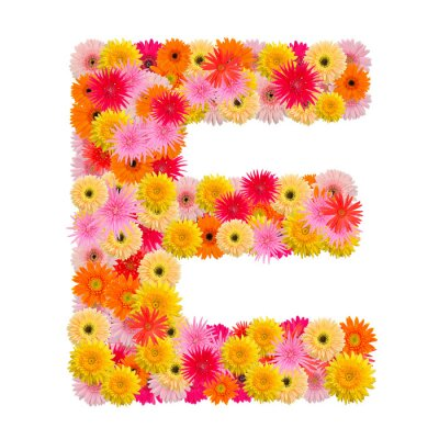 Canvas print Letter E alphabet with gerbera  isolated on white background