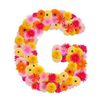 Canvas print Letter G alphabet with gerbera  isolated on white background