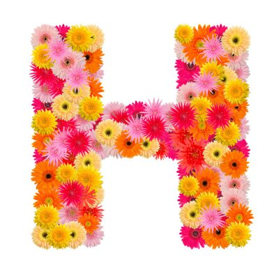 Canvas print Letter H alphabet with gerbera  isolated on white background