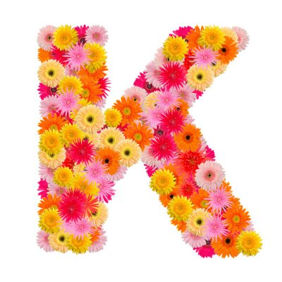 Canvas print Letter K alphabet with gerbera  isolated on white background
