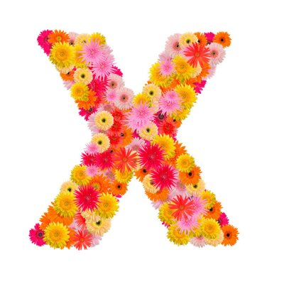 Canvas print Letter X alphabet with gerbera  isolated on white background
