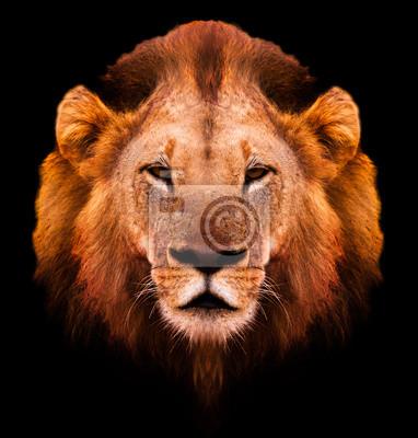 Canvas print Lion Portrait