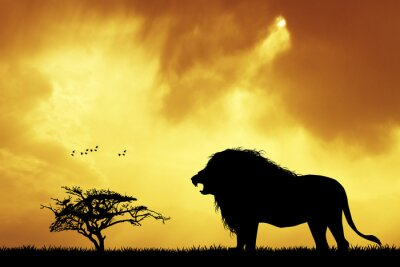 Canvas print Lion silhouette at sunset