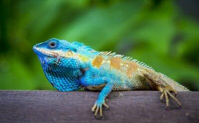 Canvas print Lizard