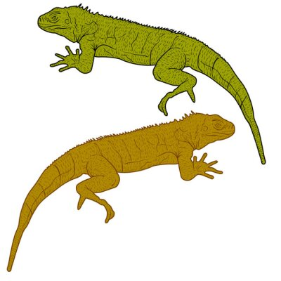 Canvas print Lizard is goanna silhouette on a white background. Vector illustration