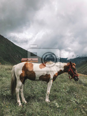 Lonely paint horse in the mountains over on a green meadow horizon with distant caucasus peak mountains. Wide endless landscape with cloudy sky. Georgia, Kazbegi, Caucasus