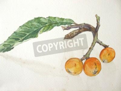 Canvas print Loquat