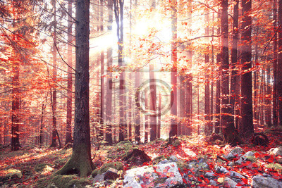 Lovely shiny red color autumn sunlight with beams in forest. Lovley autumn season red color leaves in forest landscape.