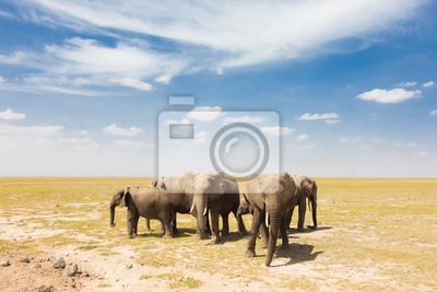 Canvas print Loxodonta africana, African bush elephant.