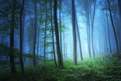 Canvas print Magic blue color light in mystic forrest