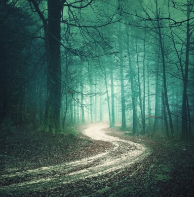 Canvas print Magic color autumn forest road. Dreamy bllue green colored foggy countryside forest tree with winding road background. Fantasy colored woodland. Color filter effect used.