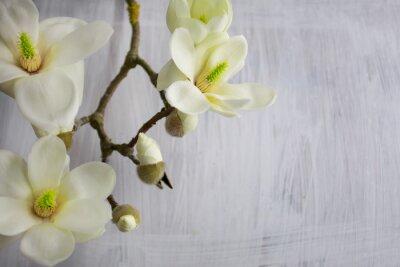 Canvas print Magnolia Flower blossom