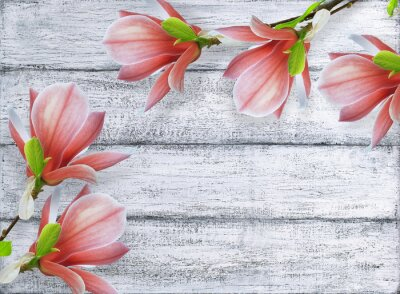 Canvas print Magnolia flowers on background of shabby wooden planks