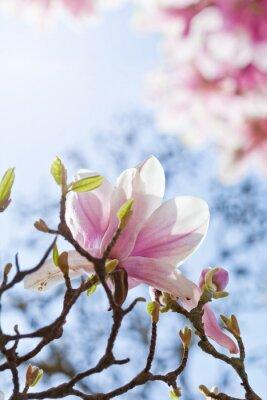 Canvas print Magnolienblüte