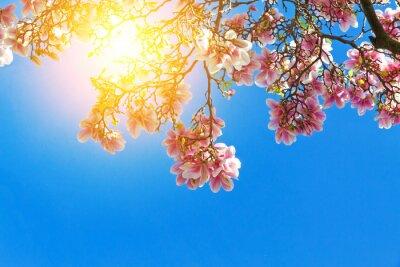 Canvas print Magnolienblüten in der sonne