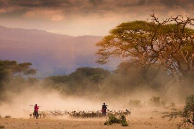 Canvas print Masai shepherds with herd og goats