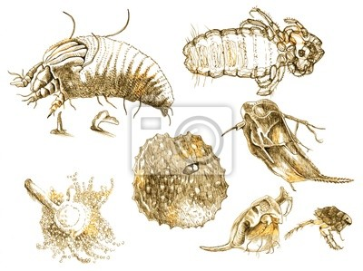 MICROORGANISMS (pictures in vintage style. Drawings)