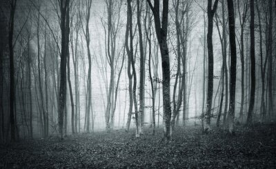 Canvas print Monochrome black and white grunge textured color foggy mystic forest trees landscape.